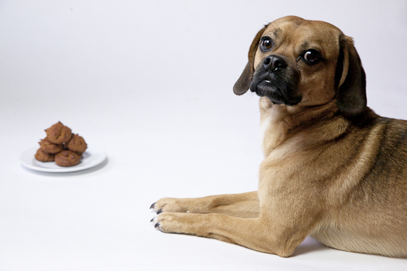 Peanut Butter Cinnamon Molasses Dog Treats (Vegan & Gluten-Free) | Is That a Puggle? | picklesnhoney.com