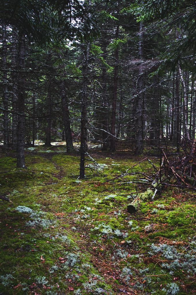 #PHroadtrip Week 1: Boston to Acadia to The White Mountains   picklesnhoney.com