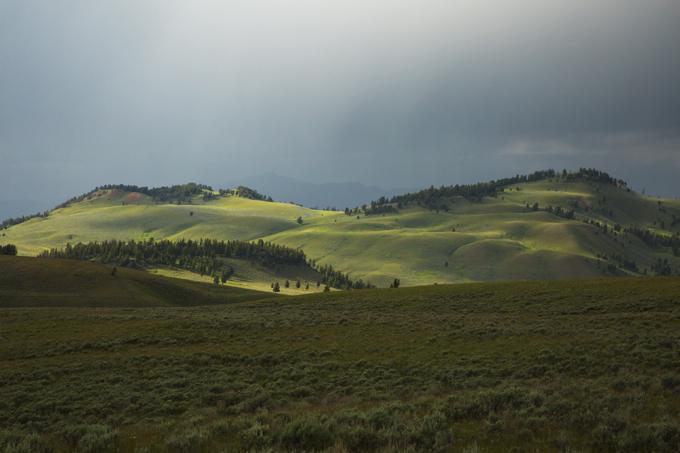 Week 6: Yellowstone National Park   picklesnhoney.com #PHroadtrip