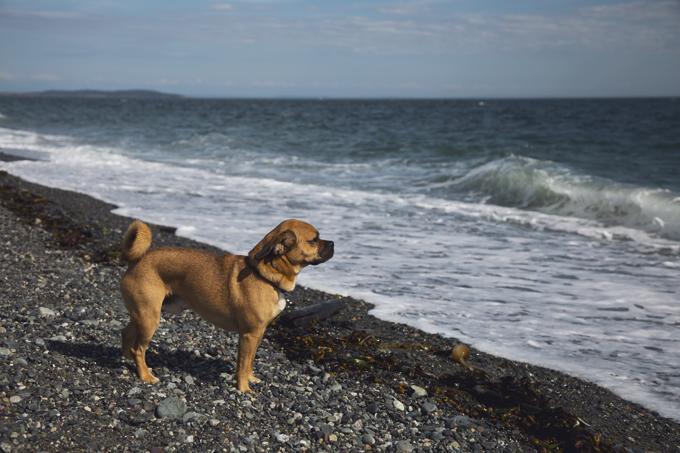 #PHroadtrip Week 9: San Juan Island, WA   picklesnhoney.com