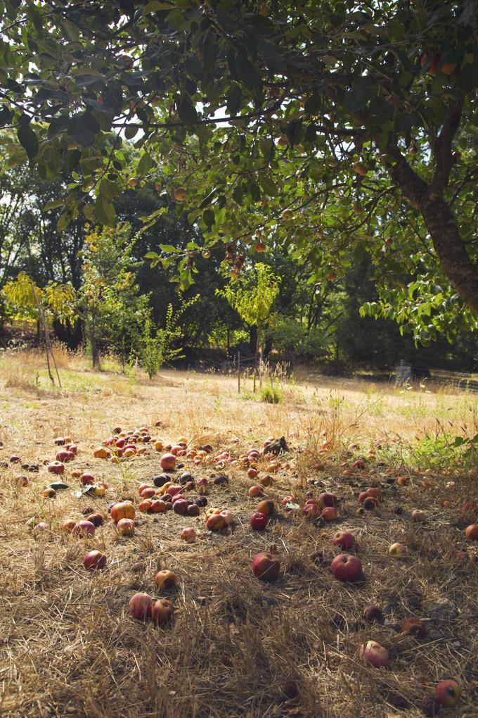 #PHroadtrip Week 11: Sonoma County, CA   picklesnhoney.com #roadtrip