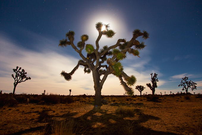 Joshua Tree National Park, CA | picklesnhoney.com #PHroadtrip #roadtrip #travel