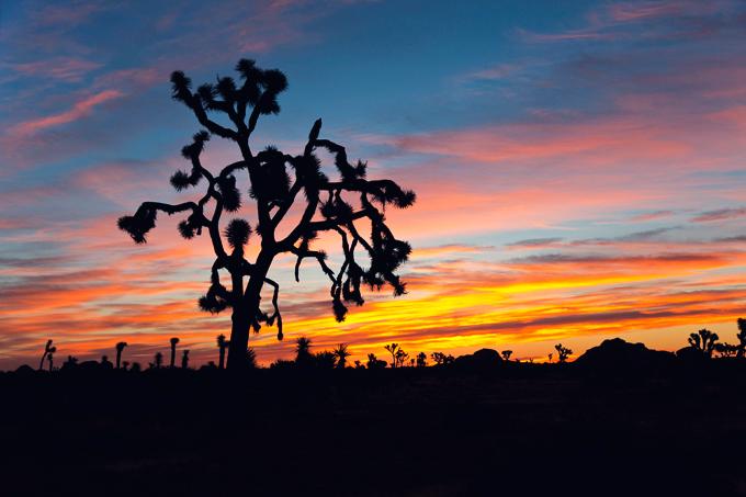 Joshua Tree National Park, CA | picklesnhoney.com #PHroadtrip #roadtrip #travel