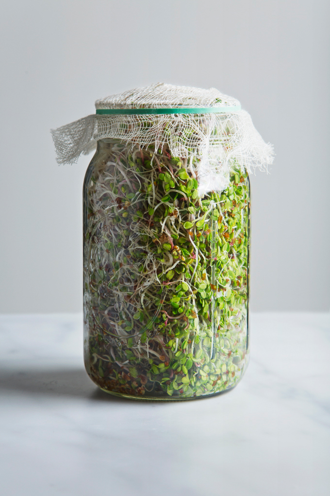 How to Grow Sprouts in a Jar   picklesnhoney.com #sprouts #jar #diy #recipe
