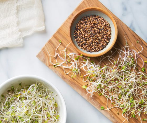 How to Grow Sprouts in a Jar | picklesnhoney.com #sprouts #jar #diy #recipe
